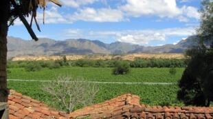 Vue des vignobles de la vallée de Tarija.