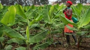 Angola is aiming to expand its agricultural sector, which could provide many with employment