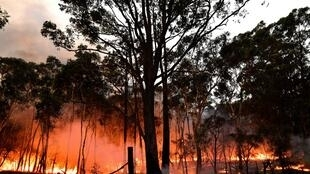 Australian firefighters conducting back burning measures to secure residential areas from encroaching bushfires at the Mangrove area, some 90-110 kilometres north of Sydney.