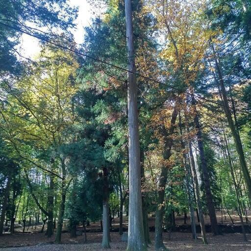 Una vista del parque de Carvalliño. Octubre de 2017.