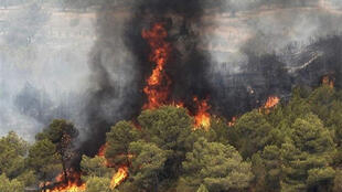 سازمان جنگلهای ایران علت ۱۱۰۰ مورد آتشسوزی در یک ماه اخیر را «سیاسی» اعلام کرد