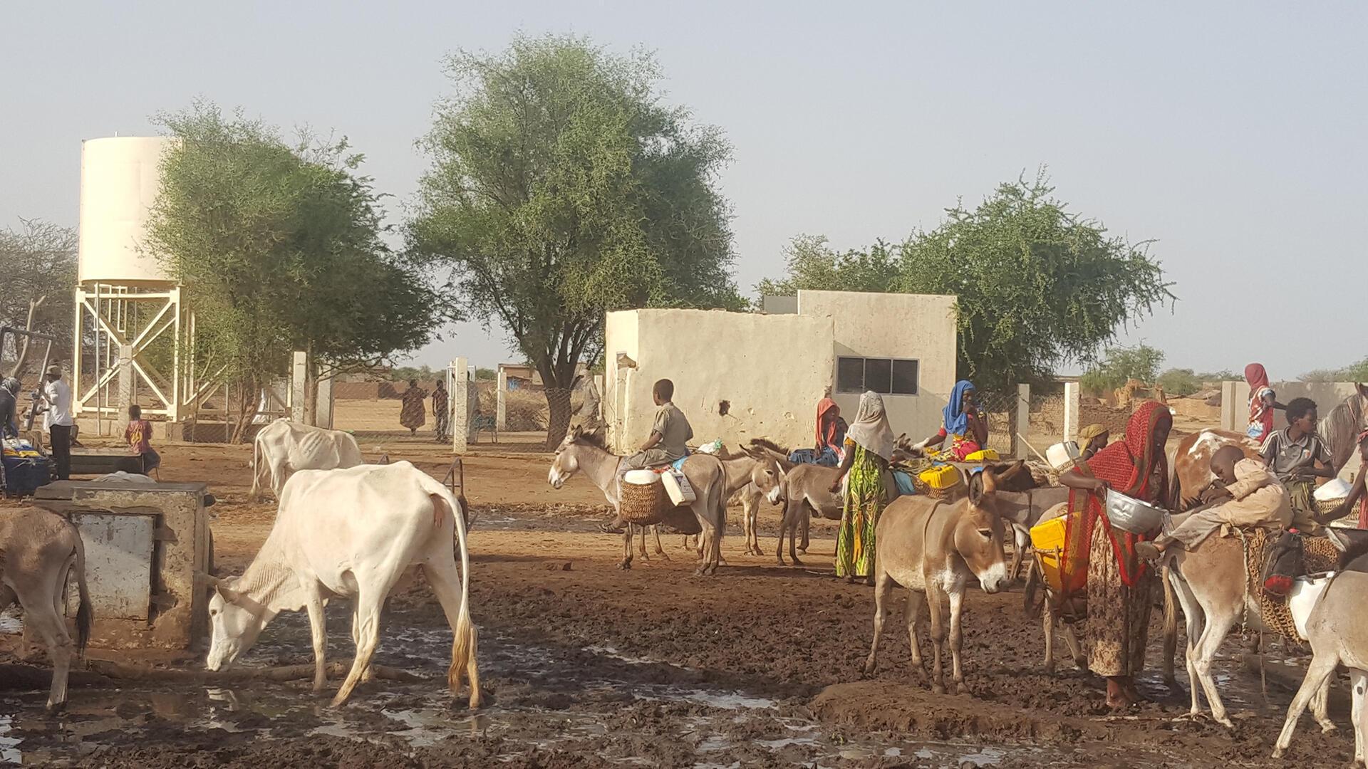 Afrique - Une vue de la station pastorale de Am Sak - Le coq chante 26 septembre 2021