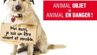 Fundação francesa lançou abaixo-assinado em defesa de animais.