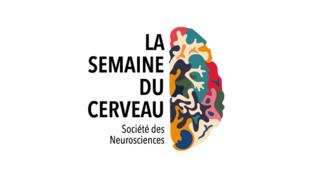 Logo de la Semaine du Cerveau 2019.