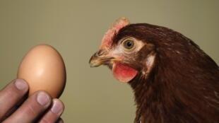 Tai tiếng trứng nhiễm dioxine