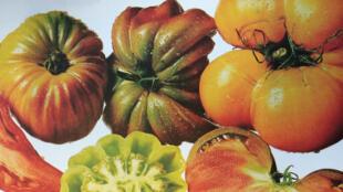 «Tomates d'hier et d'aujourd'hui», de Louis Albert de Broglie et Dominique Guéroult, photos de Marc Dantan aux éditions Hoëbeke.