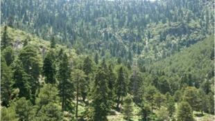 Vista de una parte del Parque Nacional Talassemtane, en el norte de Marruecos.