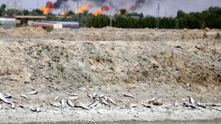 La province irakienne de Bassora risque de connaître un nouvel épisode de forte pollution de l'eau comme en 2018.
