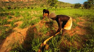 Des fermiers dogons. (Image d'illustration)