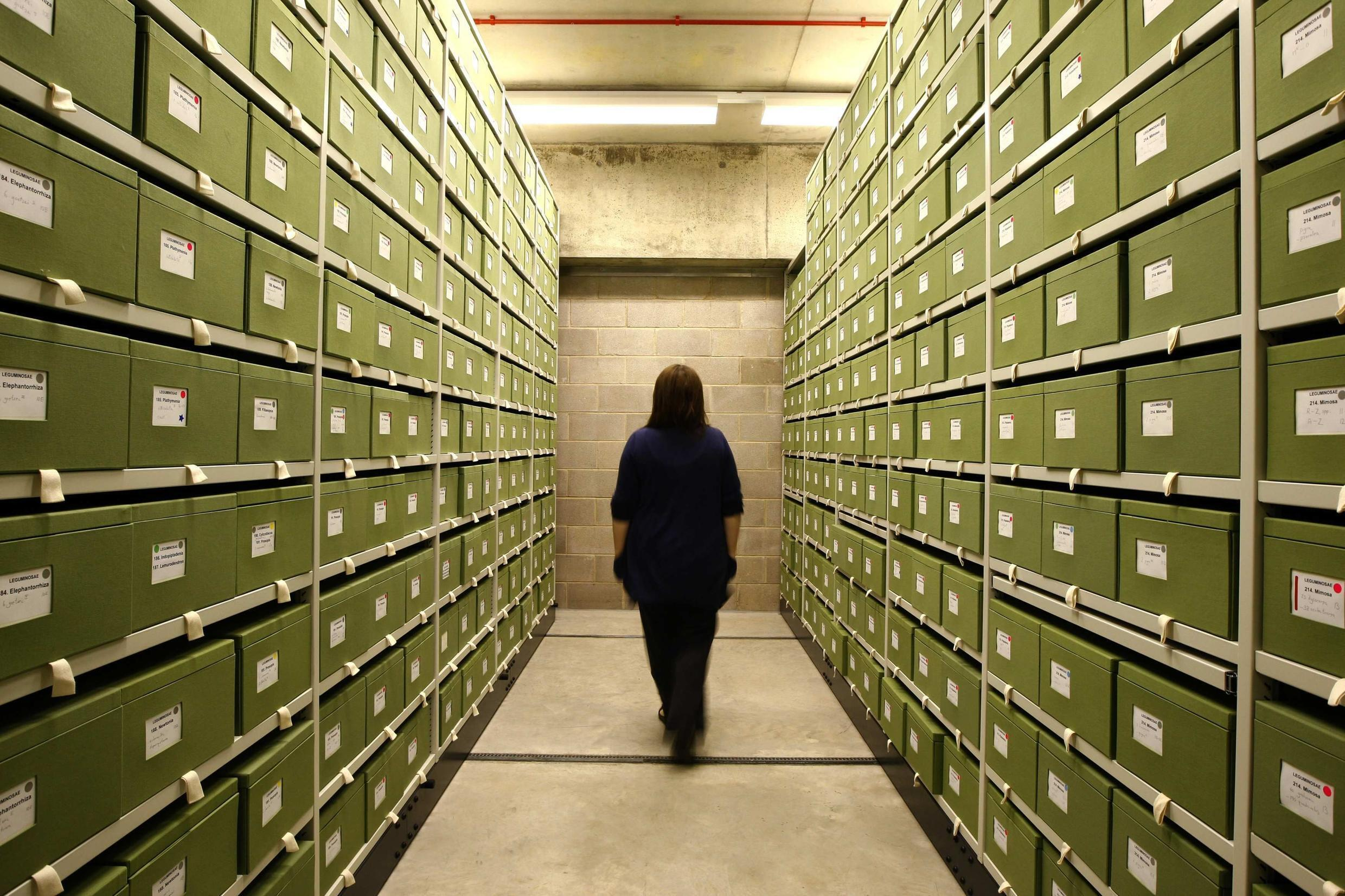 The boxes of specimens in the new wing of the herbarium in Kew Gardens in London