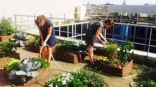 Jardins e hortas no local de trabalho melhoram o bem estar