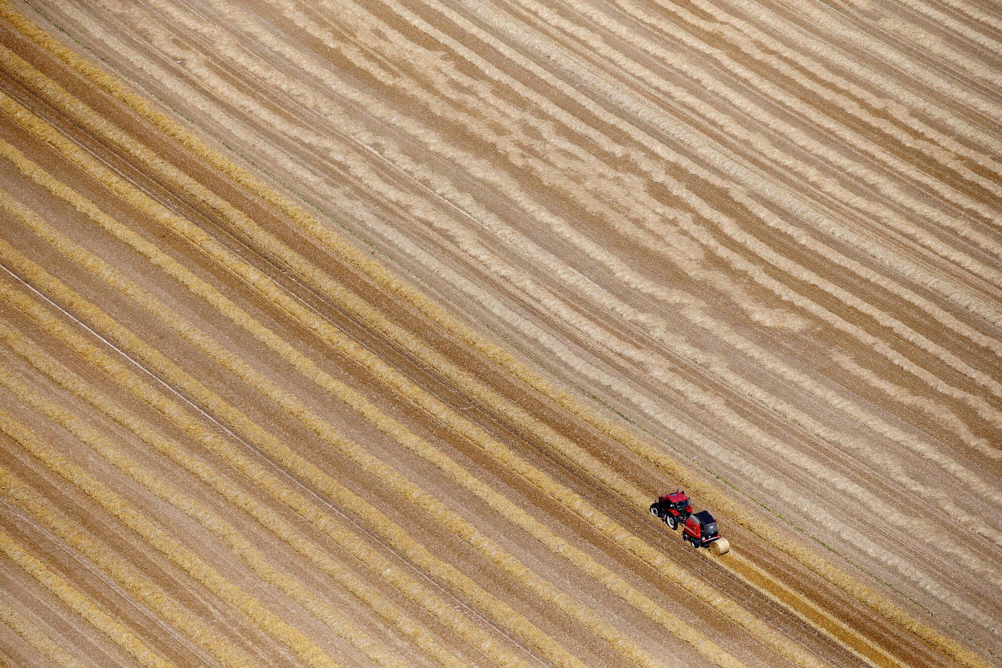 Une vue aérienne d'un champ de blé à Coquelles, près de Calais dans le nord de la France.